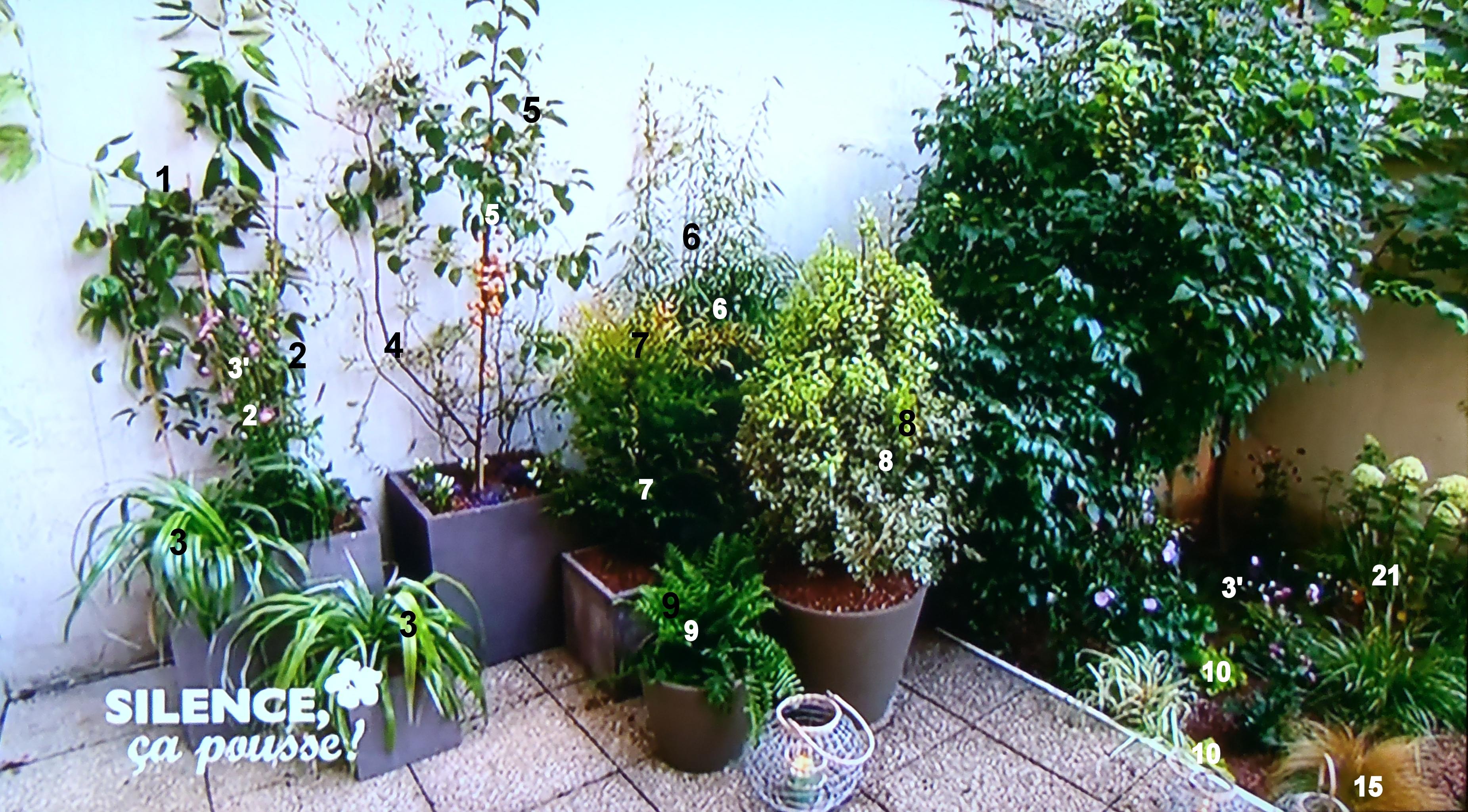 Un rez de jardin parisien raffin pas de panique d cryptage de l 39 mission - Bambou en jardiniere ...