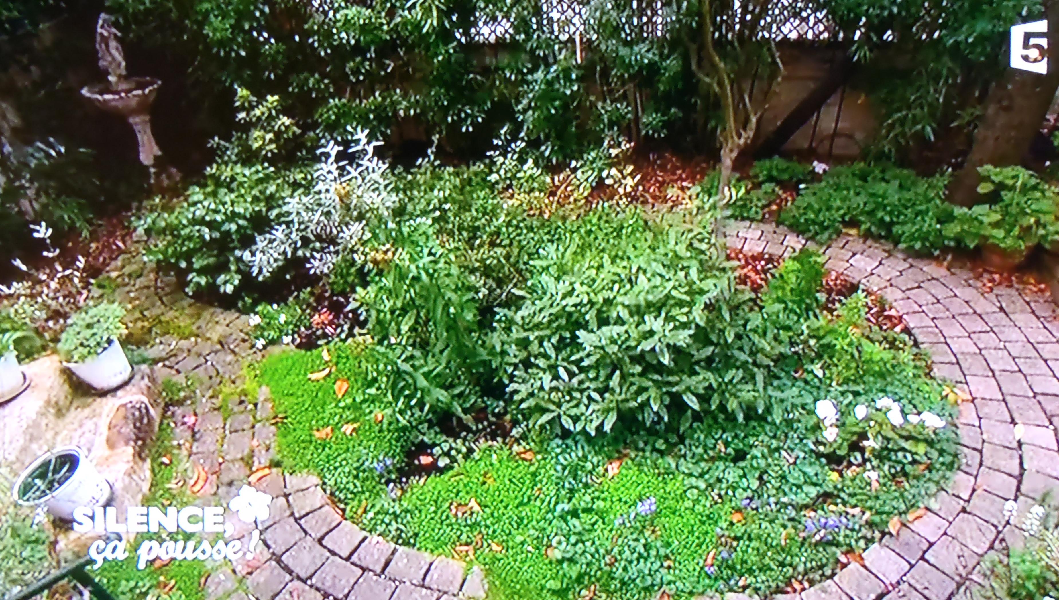 Un petit jardin japonais parisien pas de panique for Paysagiste jardin japonais
