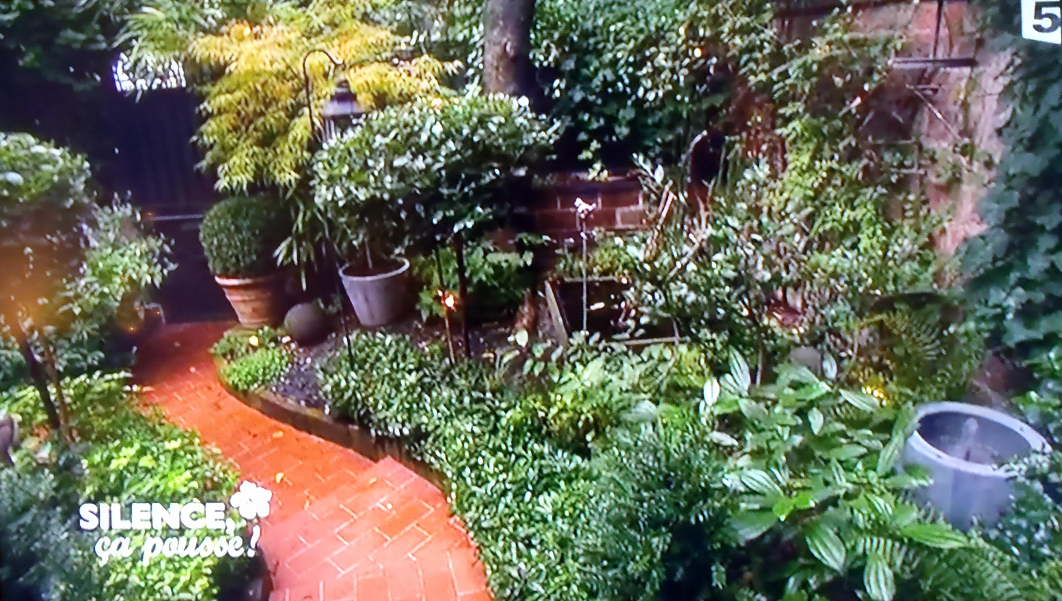 Am nager un petit jardin franco anglais d ombre en r gion for Amenager un jardin anglais