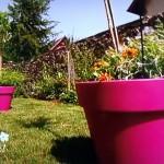 Un potager sur un jardin terrasse en climat Montagnard