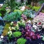 Un petit jardin Japonais Parisien