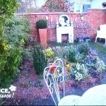 Une alternative à la pelouse à l'ombre
