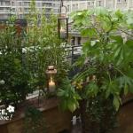 comment transformer une terrasse en jardin